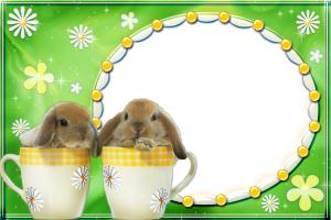 Два очаровательных кролика в кружках. Фоторамки для фотошопа. Бесплатно рамки для фото 200