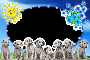 Если вам нужна весёлая фоторамка которая наполнит ваше фото позитивом, то рамка для фотошопа с очаровательными щенками далматинцами - идеальный вариант. Рамка создана для горизонтального фото, форма вставки - овал. Обрамление для фото - голубые бусы. Солнце, цветы и весёлые щенки украсят и отлично дополнят любую фотографию, особенно детскую или фото семьи после отпуска.