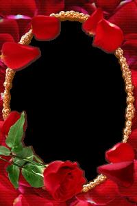 Величественная рамка для фотошопа с розой и лепестками, в обрамлении золотого овала. Романтика и страсть так и бушуют в ней. Вставив любовный кадр или написав поздравление на юбилей близкому человеку, будьте уверены, получится отлично.