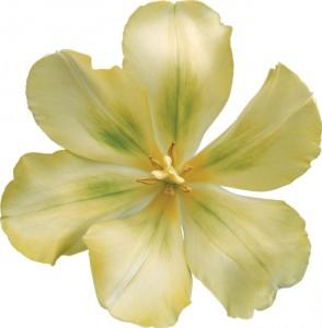 Дивный раскрывшийся цветок.