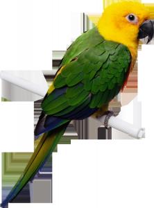 Клипарт попугайчик