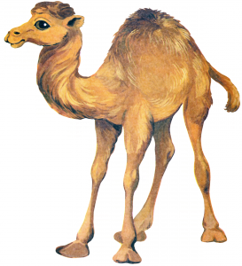 Клипарт маленький верблюд