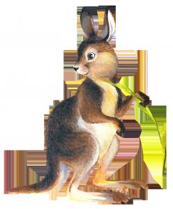 Клипарт рисунок кенгуру
