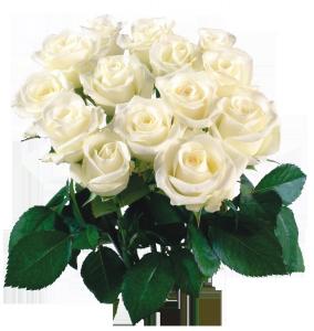 Целая охапка шикарных белых роз.
