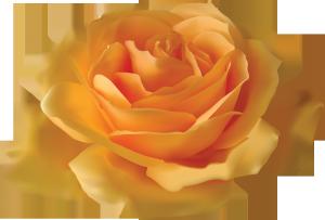 Клипарт роза.