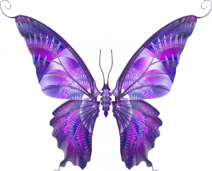 Клипарт бабочка фас