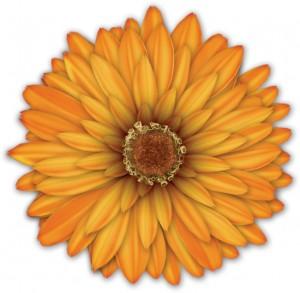 Календула в пышной оранжевой юбочке.