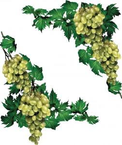 Клипарт виноград