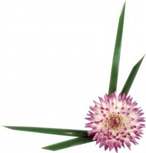 Элегантный цветок георгина украсит угол любого фотоснимка.