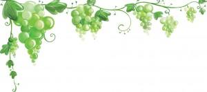 Прозрачный фон с гроздьями винограда для декорирования.
