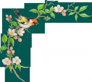 Райская птичка на ветке цветущей яблони весенним утром.