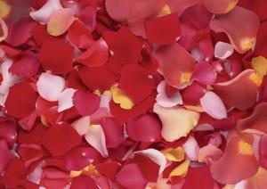 Фон для фотошопа - 125. Лепестки роз - романтичный фон.