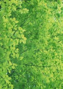 Фон для фотошопа - 243. Зеленый фон для фотошопа. Зеленая листва.
