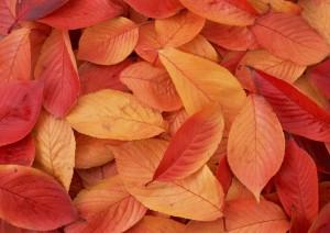 Фон для фотошопа - 246. Осенние листья шуршат под ногами.