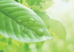 Фон для фотошопа - 327. Утренняя роса на листве.