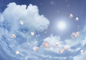 Фон для фотошопа - 331. Лепестки роз витают в облаках.