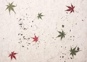 Фон для фотошопа - 359. Китайский клен. Кленовые листья на белом фоне.